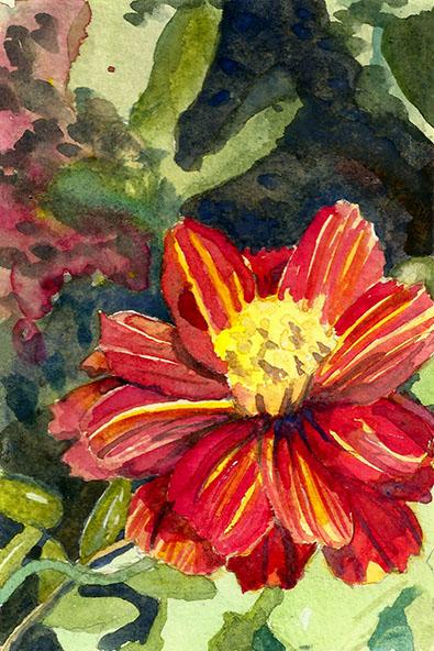 flower_marigold_LOres